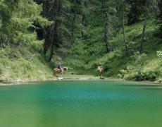 2019-09-11 17_57_34-L'Ippovia del trentino_ Trekking a cavallo sul Lagorai, 400km e 15 tappe