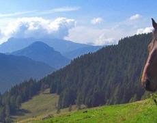2019-09-11 17_57_59-L'Ippovia del trentino_ Trekking a cavallo sul Lagorai, 400km e 15 tappe